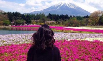 Mont Fuji X Cherry blossom